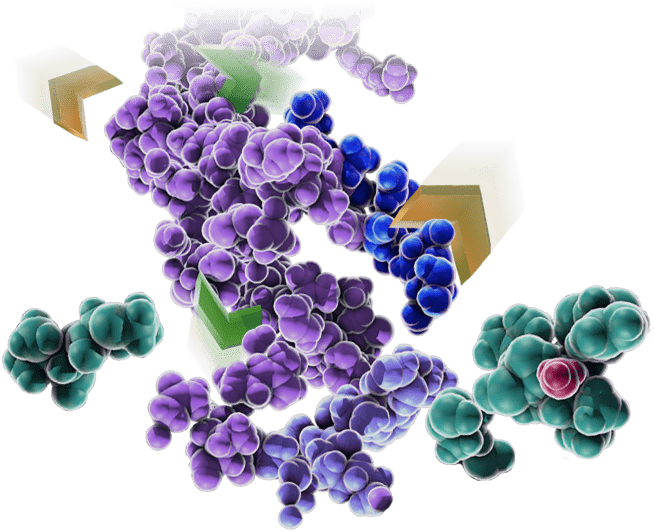 28626279-L1-RapidTrypsin-Hero-Foreground