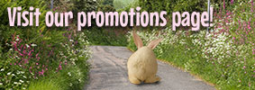 Click here to see our promotions!