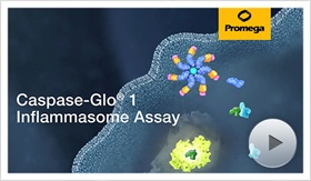 Click here to watch the Caspase-Glo 1 Inflammasome Assay Video