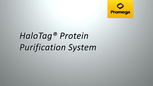 proteinpurification-fallback