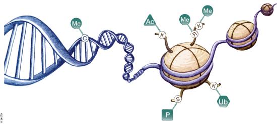 genomic imprinting animation - photo #13