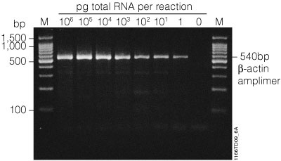 Pcr amplification for Pcr template amount
