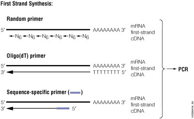PCR Amplification | An Introduction to PCR Methods | Promega