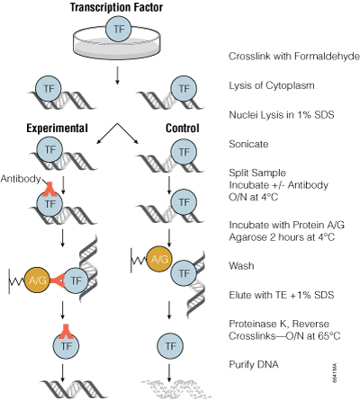 Protein Purification And Analysis