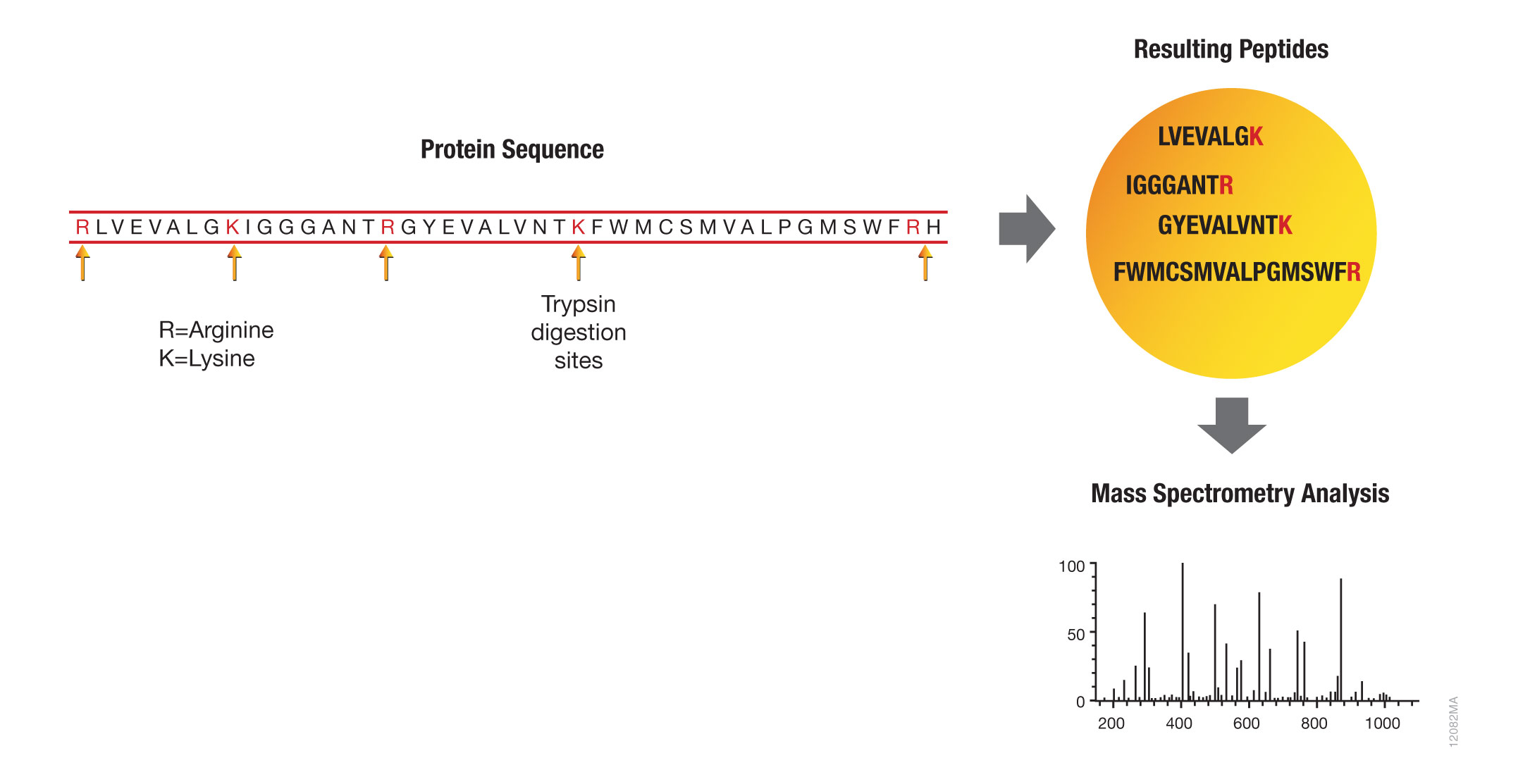 Bottom-up proteomic analysis with trypsin.