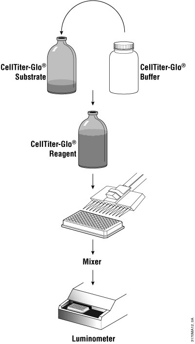 Schematic diagram of CellTiter-Glo® Luminescent Cell Viability Assay protocol.