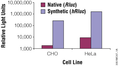 The synthetic Renilla luciferase gene supports higher expression than the native gene in mammalian cells.