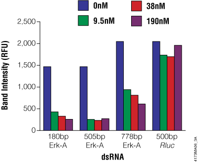 Effect of Erk-A dsRNA length and concentration of Erk-A protein levels in S2 cells.