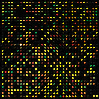 Cy®3- and Cy®5-labeled cDNA hybridized to a DNA microarray.