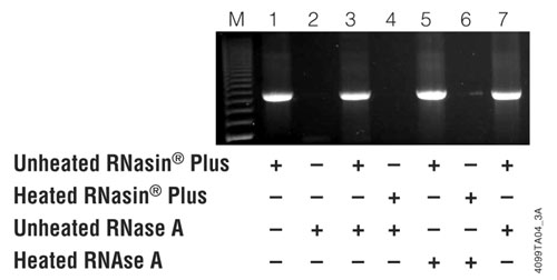 RNasin Plus inhibits RNase A and protects a template prior to RT-PCR.