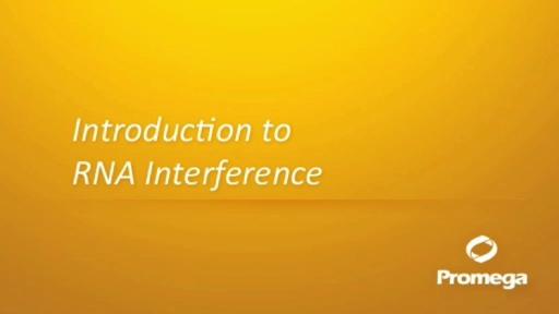 rna interference animation