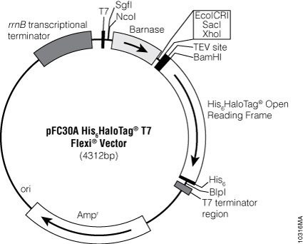 pFC30A His6HaloTag® T7 Flexi® Vector.