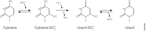 Bisulfite conversion of unmethylated cytosines to uracil.