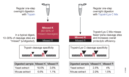 Side-by-side comparison of cleavage sites missed by trypsin or Trypsin/Lys-C Mix using a standard digestion protocol.