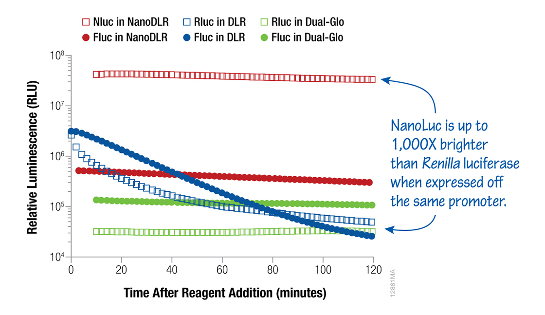 NanoDLR Reporter Assay give brighter signals with stable signal kinetics.