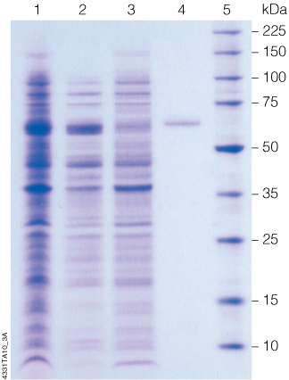 profinia protein purification system manual