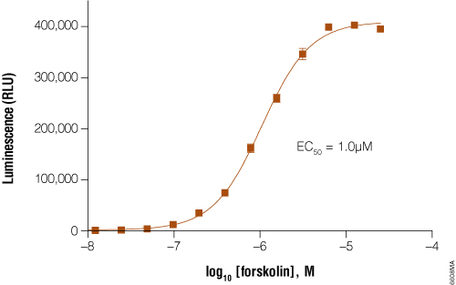 GloResponse CRE-luc2P HEK293 cells response to forskolin titration.