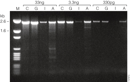 GoTaq Hot Start Polymerase with Colorless Flexi Buffer (C) and with Green Flexi Buffer (G) outperforms antibody (I) or chemically modified (A) competitor hot-start DNA polymerases for amplification of a 2.4kb fragment of the Human APC gene.