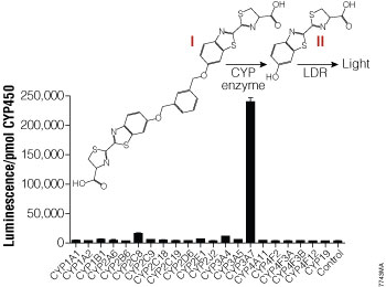 CYP enzyme selectivity for the Luciferin-3A7 substrate.