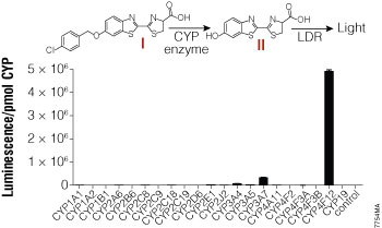 CYP enzyme selectivity for the Luciferin-4F12 substrate.