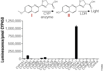 CYP enzyme selectivity for the Luciferin-4A substrate.