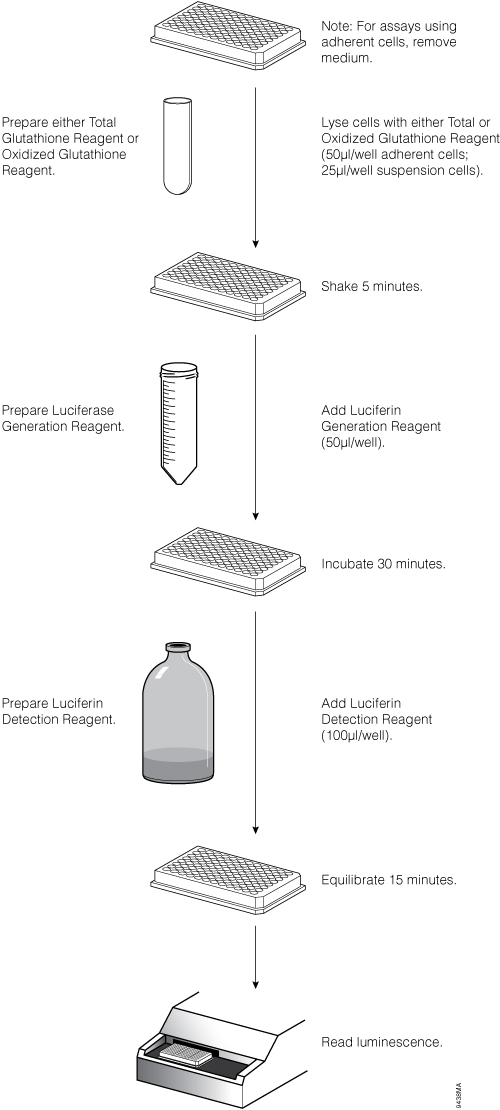 Workflow for the GSH/GSSG-Glo Assay.