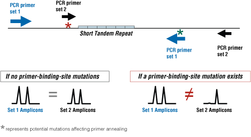 The effect of a primer-binding-site mutation on STR analysis results.