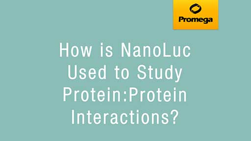NanoLuc and Protein Interactions