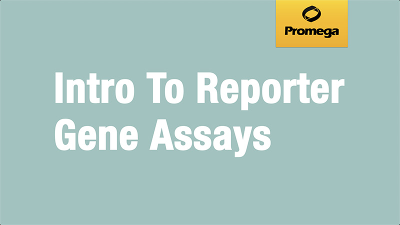 Introduction to Reporter Gene Assays