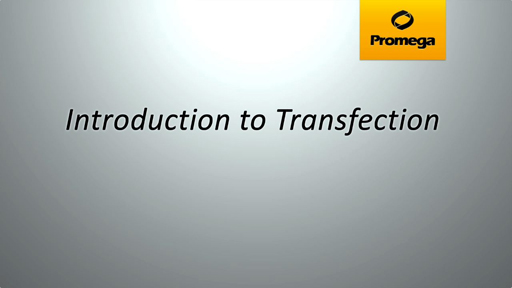 Introduction to Transfection