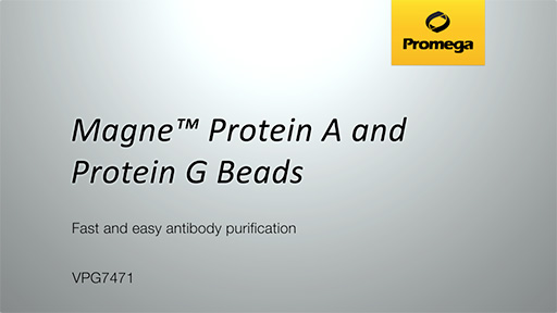 Magne Protein G Beads versus Leading Competitors