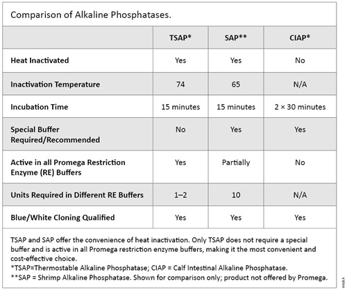 Comparison of alkaline phosphatases.