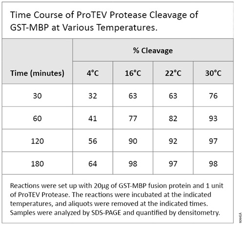 Cleavage of GST-MBP at various Temperatures. Reactions were set up with 20micrograms of GST-MPB fusion protein and 1 unit of ProTEV Protease. The reactions were incubated at the indicated temperatures, and aliquots were removed at the indicated times. Samples were analyzed by SDS-PAGE and quantified by densitometry.