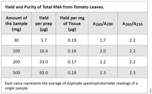 Yield and Purity of Total RNA from Tomato Leaves.